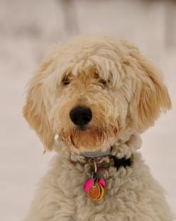 Julie in snow